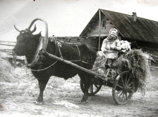 Праздник деревень Шадринского Заречья