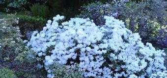 Цветы Бергена