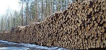Заготовка древесины: 1 квартал