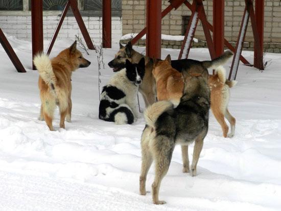 Безнадзорные собаки