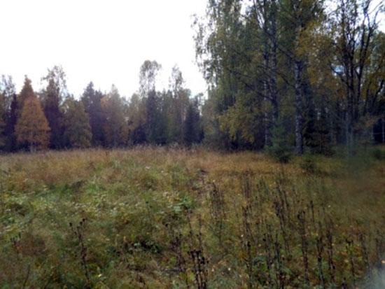 Вид хутора от речки на место, где когда  - то стоял дом
