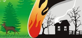 Общие требования пожарной безопасности в лесах