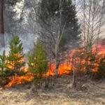 Не допустить лесных пожаров