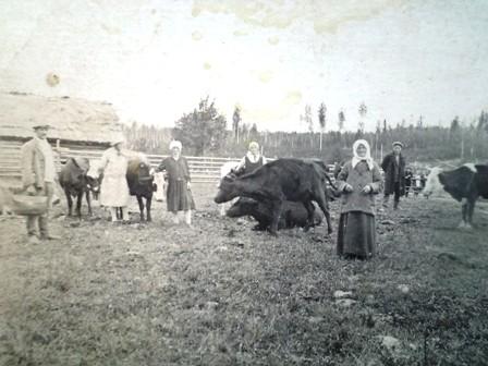 В колхоз приехал ветеринар – привели частных коров на осмотр.