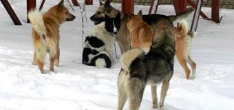 Собачий террор