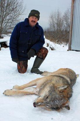 Двумя волками стало меньше