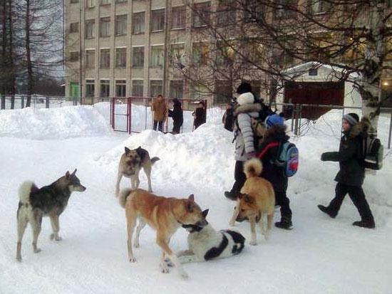 Собаки в поселке Опарино