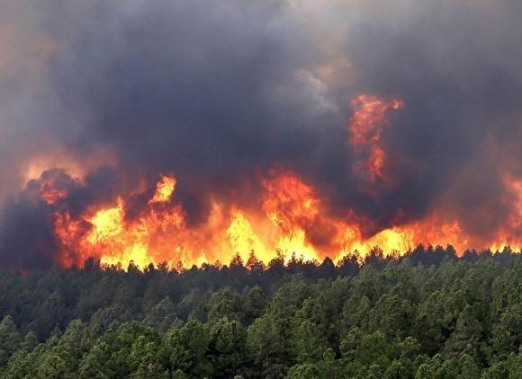 На снимке: лесные пожары в России, которые никто не тушит.
