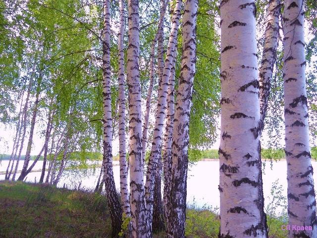 Пейзажи работы Сергея Краева
