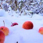 Положение о конкурсе «Зимние забавы -2021»