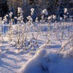 Положение о конкурсе «В объективе зима – 2021»