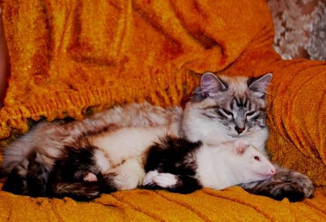 Люся и Дуся. Из жизни хорьков