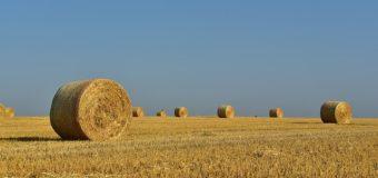 Корма для фермы
