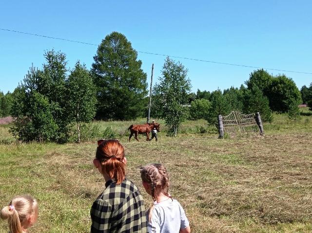 В Нижнем Починке есть лошадь!