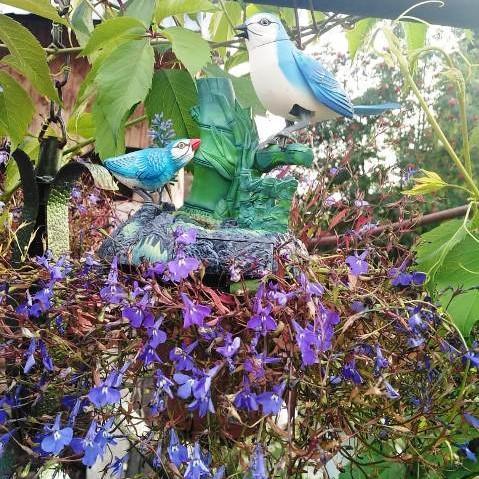 Уютный цветущий дворик